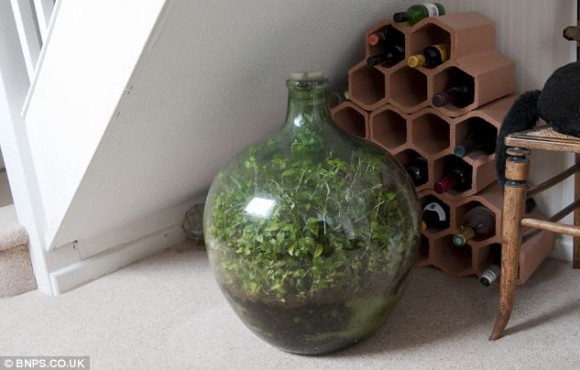 bottle garden david latimer