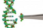 """""""Genetické nůžky"""" našly další využití. Inovativní technologie CRISPR už dokáže cílit i na koronavirus"""