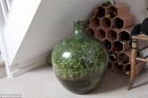 bottle garden david latimer