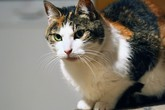 Nová japonská technologie: O krok blíže k porozumění domácím mazlíčkům