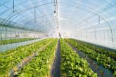 Průhledné solární panely mohou dodávat energii skleníkům